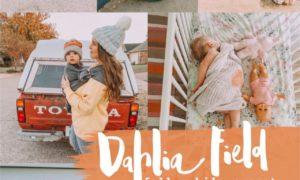 Dahlia Field Lightroom Mobile Preset