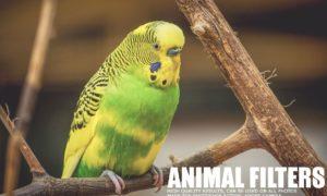 17 Animal Lightroom Presets 1167174