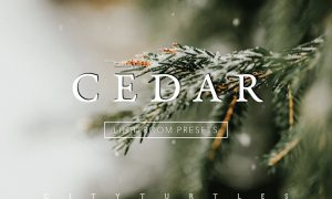 CEDAR Subtle Moody Lightroom Presets 3313228