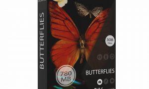 RAWexchange - Butterflies