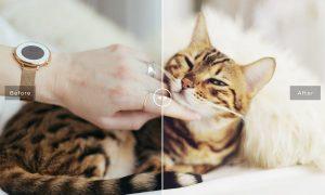 Pet Photoshop Actions Collection Z4FJZU