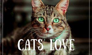 Cats Love Lightroom Presets - Mobile & Desktop