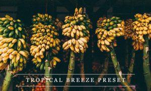 Tropical breeze - Lightroom preset 1237376