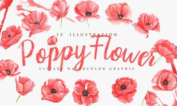 15 Watercolor Poppy Flower Illustration K5AH6EY