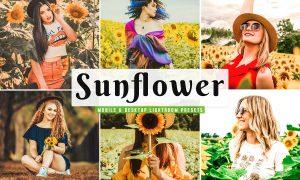 Sunflower Field Presets | Desktop 4792014