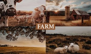 Cinematic Farm Lightroom Presets 4222146