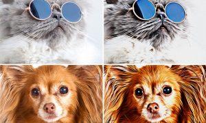Pet Paint Effect 346314439