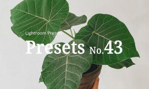 10 Light Botanical Lightroom Presets 5351307