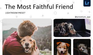Faithful Friend - Lightroom Presets 5227534