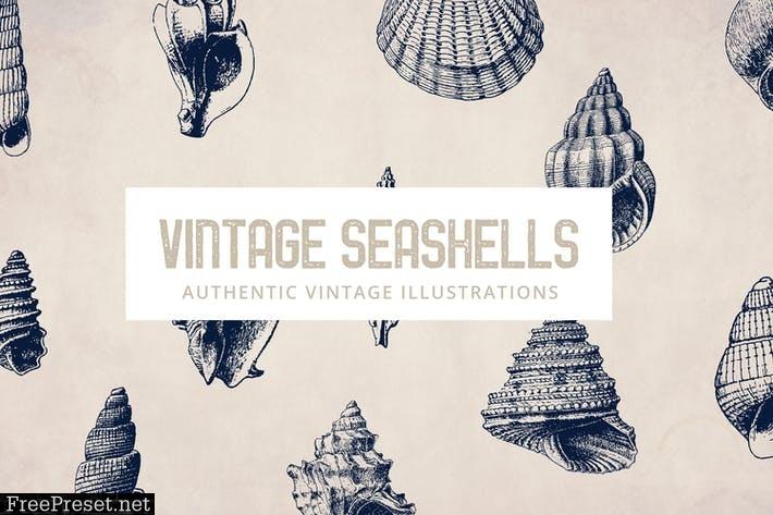 135 Seashell Illustration Collection C2X8CJ