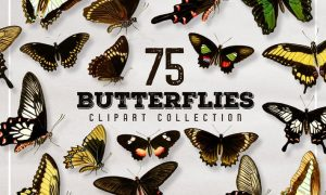 75 Vintage Butterfly Graphics 2SFMJ4