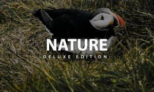 Nature Deluxe Editon   For Mobile and Desktop