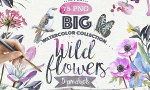 Wild flowers collection 75 PNG