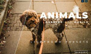 Animals Desktop and Mobile Lightroom Preset