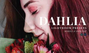Dahlia Mobile and Desktop Lightroom Presets