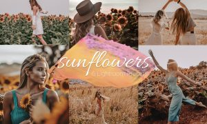 Sunflowers - Lightroom Presets Lr 6150441