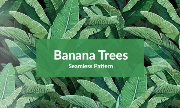Banana Trees SJCJHVN