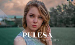 Pulesa Mobile and Desktop Lightroom Presets